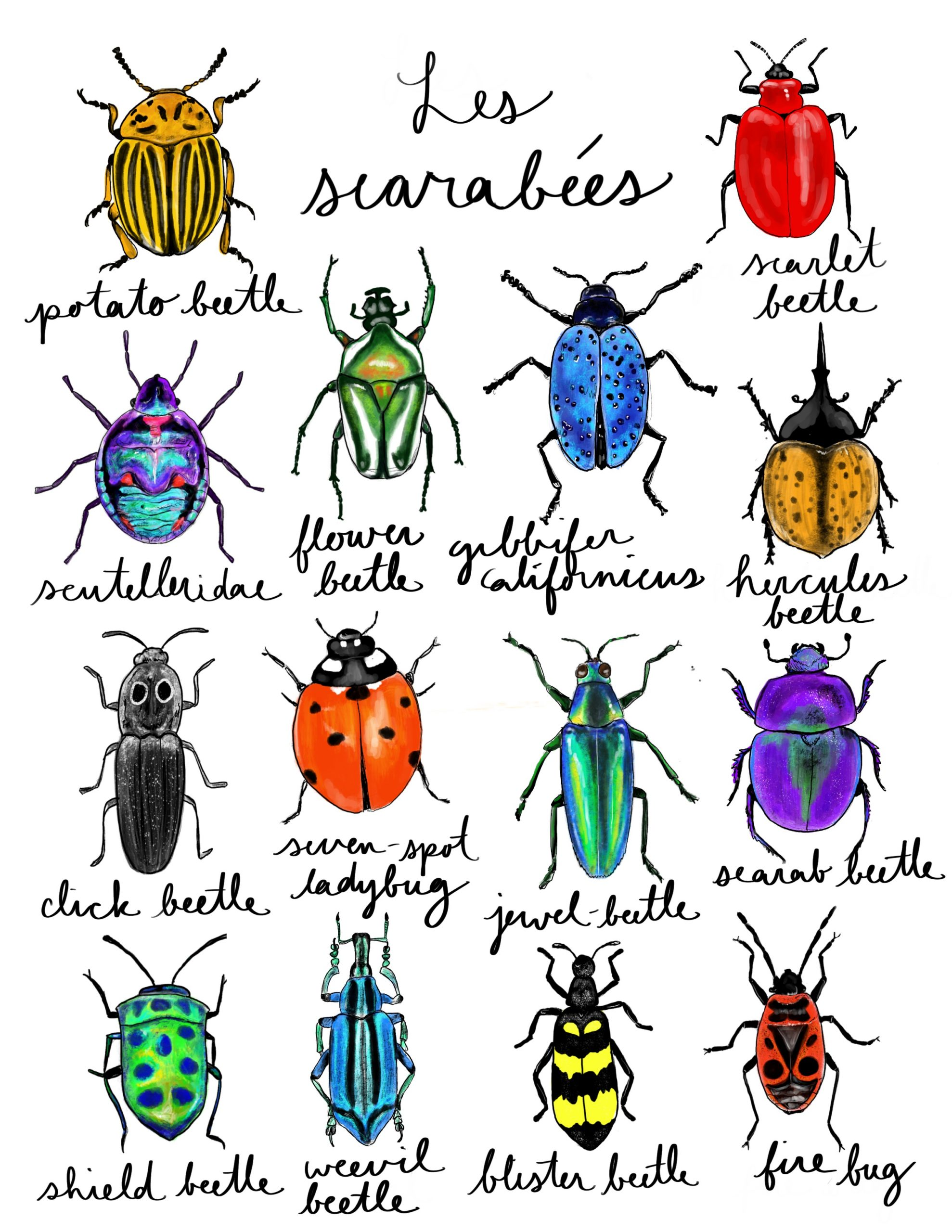 Les Scarabees