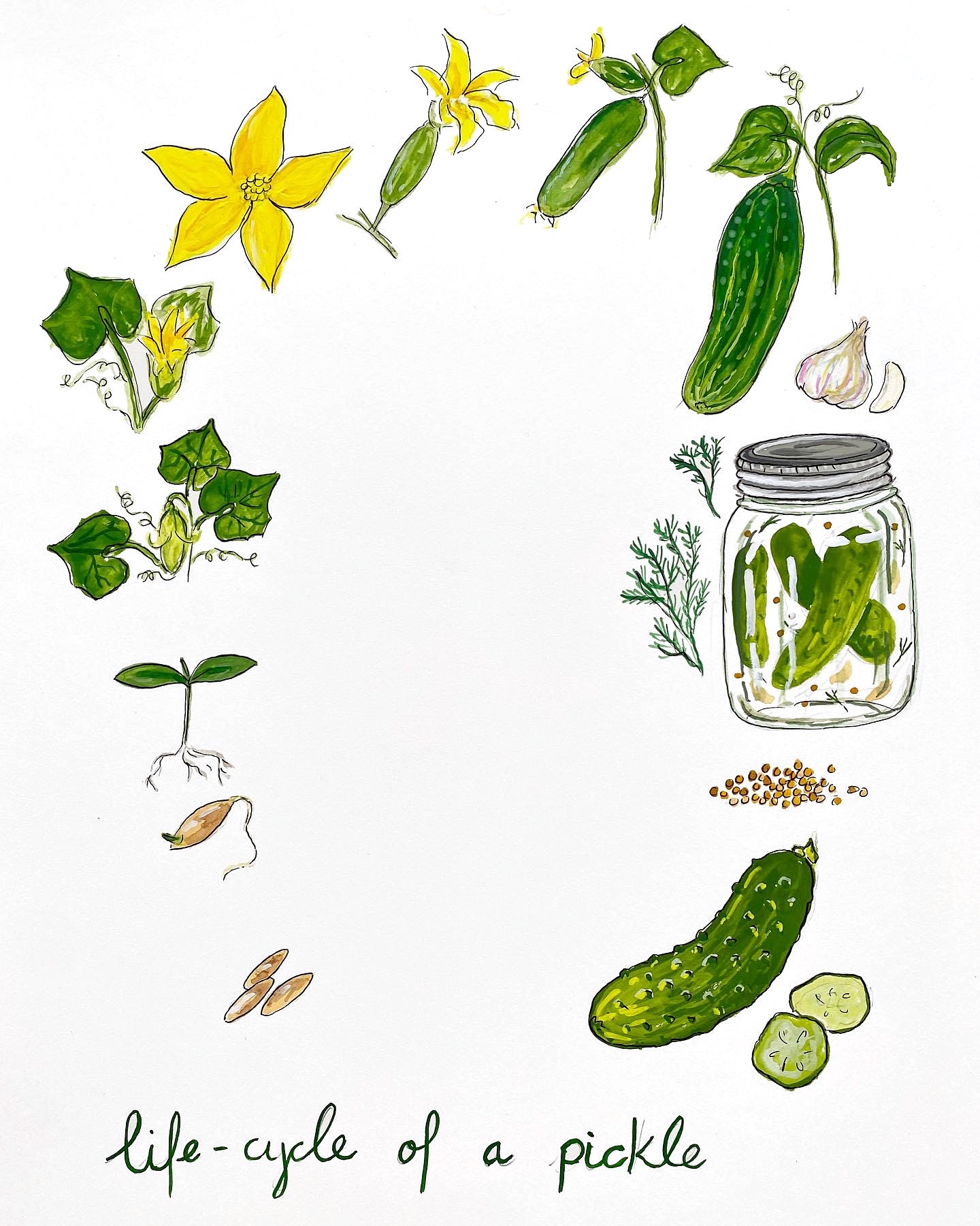 Life Cycle of a Pickle
